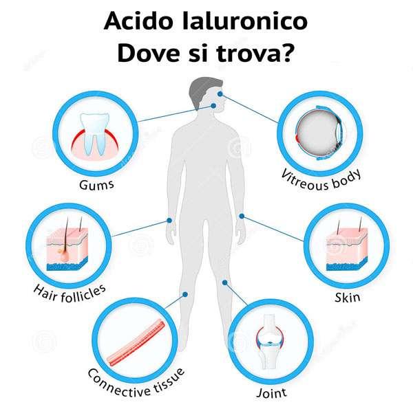 Acido-Ialuronico-dove-si-trova